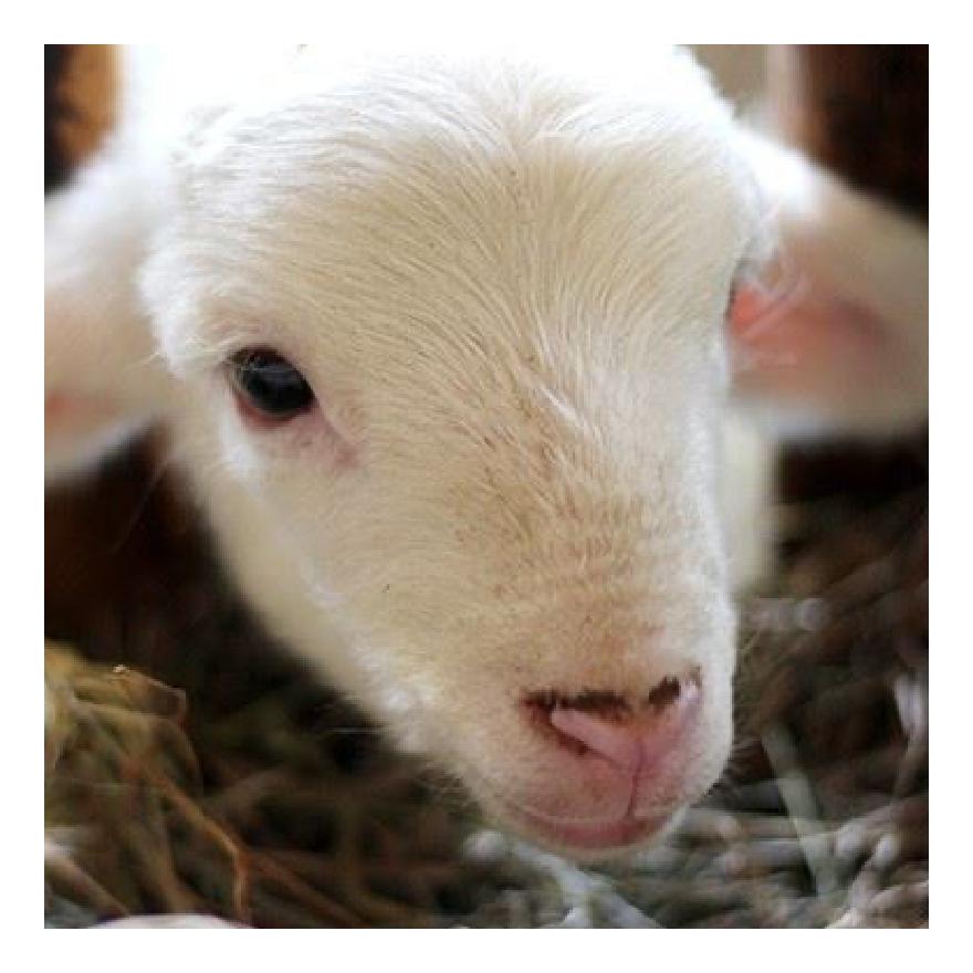 Rimuss beim der Motto- / Themen- Party Bauernhof / Tiere zum Kindergeburtstag