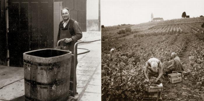 Jakob Rahm ist der Erste in Hallau, der veredelte, reblaus-resistente Reben anbaut und Drahtzuganlagen im Rebberg einführt. 1941