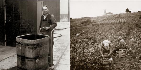 Jakob Rahm ist der Erste in Hallau, der veredelte, reblausresistente Reben anbaut und Drahtzug-anlagen im Rebberg einführt. 1941