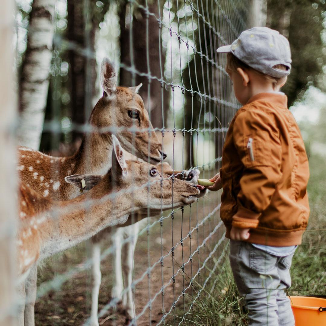 Ein Kind feiert sein Geburtstag im Tierpark und füttert einige Rehe durch einen Hag mit Früchten